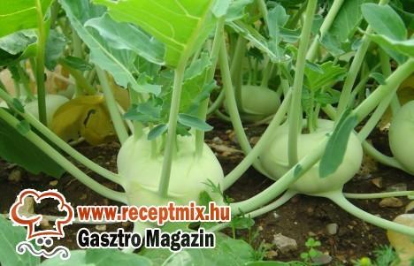 Energiaszolgáltató zöldségünk: a karalábé
