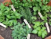 Egészséges fűszernövények