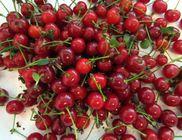 Így tudjuk tovább megőrizni a gyümölcsök frissességét