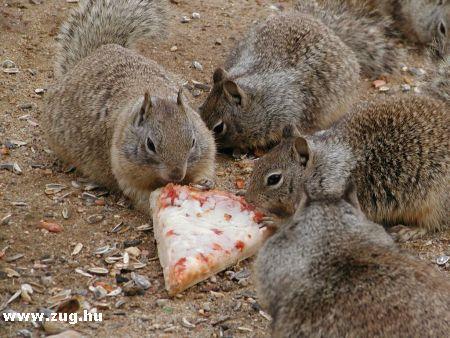 XXI. századi mókusok pizzával