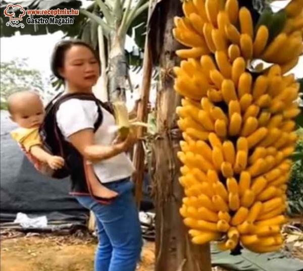 Banán a fáról