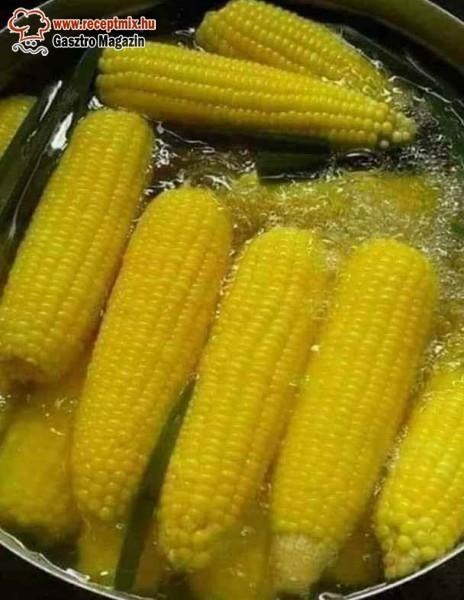 Csemege kukorica, főtt kukorica