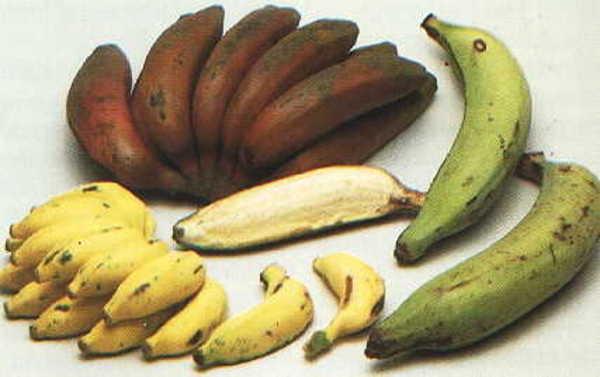 A banán érési fázisai