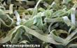 Zöld durum tészta