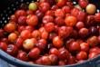 Egy tál frissen szedett cseresznye
