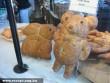 Maci a pékségbõl